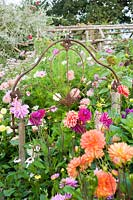 Salvaged iron bedstead serves as a decorative support in a border full of dahlias. Hilltop, Stour Provost, Dorset, UK.