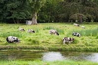 Pigs and sheep graze beside the river. Heale House, Middle Woodford, Salisbury, Wilts, UK.