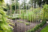 View of vegetable garden, with line of bamboo canes. Heale House, Middle Woodford, Salisbury, Wilts, UK