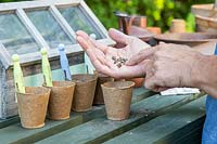 Sowing Beetroot in biodegradable pots