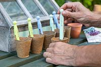 Labelling pot with newly planted seeds - Beetroot - painted clothes peg