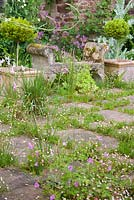 Terrace with self seeded Mexican daisy, Erigeron karvinskianus, geraniums and sisyrinchium, Cothay Manor, Somerset