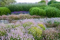 Layers of different coloured lavenders interspersed with wall daisy, Erigeron karvinskianus, and rosemary. Cliff House, Holworth, Dorchester, Dorset, UK