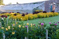 Elizabethan Walled Garden with Dahlias and glasshouse. Kingston Maurward Gardens, Dorset, UK