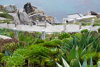 Aeoniums, aloes and agaves on slopes of Minack Theatre, Porthcurno, Penzance, Cornwall, UK