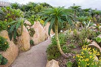 Agave, aeoniums, aloes and gasterias with Echium. Minack Theatre, Porthcurno, Penzance, Cornwall, UK