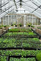 Victorian glasshouse full of seedlings. Clovelly Court, Bideford, Devon, UK.