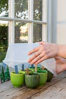 Covering miniature pots  with plastic lid