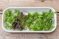 View of cut microgreens in white dish, including coriander, basil, sorrel, beetroot and mixed salad leaves.