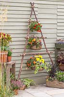 Wire baskets lined and planted with colourful bedding plant tied with rope to vertical hazel stick planter.