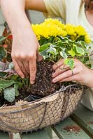 Woman adding a trailing variegated Ivy - Hedera - to basket.