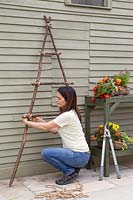 Woman tying horizontal sticks on to the vertical hazel frame to create a ladder for hanging baskets from.
