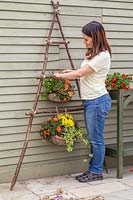 Using rope to fix wire baskets of bedding plants to vertical planter
