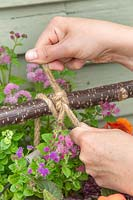 Using rope to fix baskets of bedding plants to vertical planter