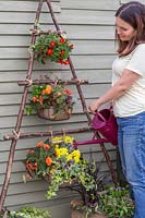 Woman watering wire baskets with bedding plants using a watering can.