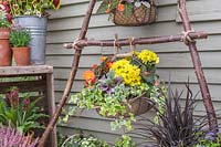 Wire baskets lined and planted with colourful bedding plants tied with rope to vertical hazel stick planter.