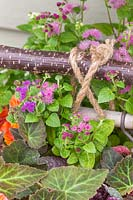 Bedding plant tied with rope to vertical hazel stick planter