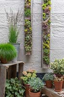 Pallet planters with succulents on wall