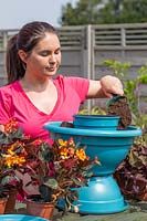 Adding compost to pot for planting