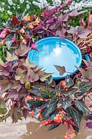 Bird bath with Begonia 'Fireworks' and Ipomoea