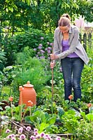 Woman planting and staking in vegetable garden