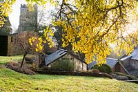 Yellow leaves and greenhouse. Old Rectory, Netherbury, Dorset