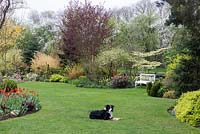 Dog lying on lawn edged with beds packed with plants, bench and with trees beyond