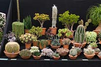 A display of cacti and succulents from The Otter Nursery, at Hampton Court Flower Show 2018.