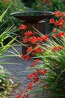 Bird bath of oak sleeper pedestal and mild steel bowl surrounded by Crocosmia 'Lucifer.