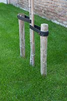 View of wooden stakes to support young tree.