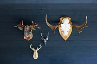 Stag ornaments hanging on navy wall.