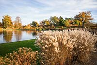 Miscanthus sinensis 'Ferner Osten' beside the lake at the Bicentenary Glasshouse Garden, RHS Garden Wisley, designed by Tom Stuart Smith.