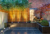 Phyllostachys bissetii and steel water wall with Acer and outside lighting, London