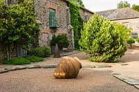 Evergreen Pinus and terracotta pot in courtyard garden, Plaz Metaxu Garden, Devon.