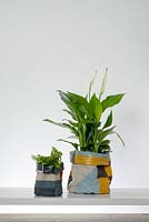 Spathiphyllum - Peace Lily and small fern with side canvas in pots.