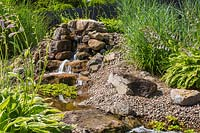 Eichhornia crassipes - Water Hyacinth in goldfish pond with cascade and Hostas