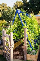 Colourful wooden frame support for runner beans with wooden gate and path made from sliced logs.