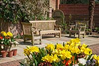 Containers of tulips and hyacinths in paved sitting area at East Ruston Old Vicarage Gardens, Norfolk, UK.