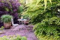 Patio table and chairs with a pot of Miscanthus sinensis 'Adagio' framed by acers and a deep purple cotinus at the Barn House, Glos in May