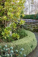 Clipped variegated box hedge with rosemary and magnolia, Devon, UK