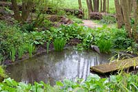 Natural pond with Caltha, Lysichiton, ferns and metal heron on jetty, Ross-on-Wye, Herefordshire