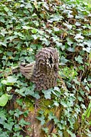 Metal owl sculpture on wooden post with Hedera - ivy, Ross-on-Wye, Herefordshire