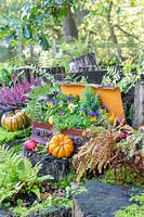 Autumn suitcase with stumps, ferns, Viola, apples and pumpkins.
