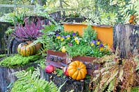 Autumn suitcase on tree stumps with ferns, Viola, apples and pumpkins.