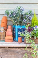 Blue autumnal arrangement, with cut Echinops - Globe Thistle - and Euphorbia in vintage tin container and stacked terracotta pots.