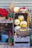 Wooden crates with harvested pumpkins, quince and flowering plants.