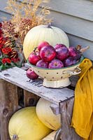 Colander of harvested apples on wooden crate stacked with yellow pumpkins.