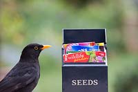 Turdus merula - Blackbird and seed packet box.