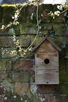 Nesting box for birds with blossom of an early Prunus - wild plum