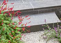 Detail shot of plants softening gravelled area in front of paved steps. Garden designed by John Davies Landscape